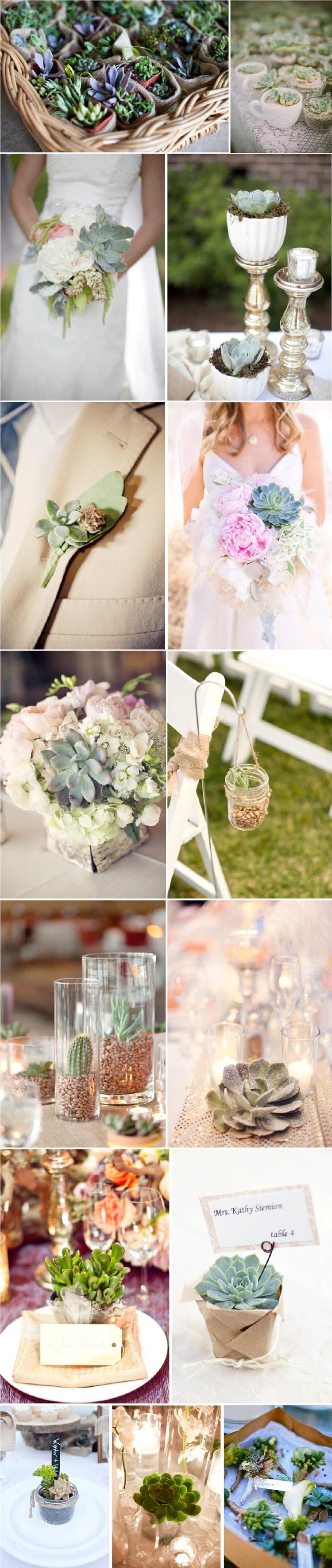 decoration mariage succulentes
